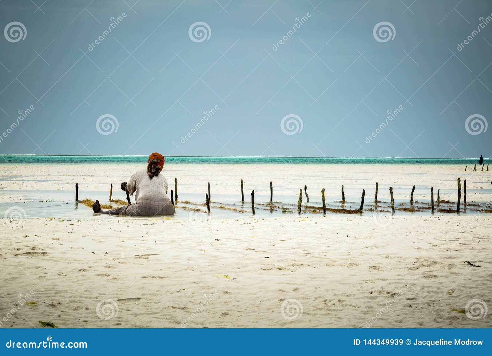 Kvinna som sitter på sand på kusten av Zanzibar som samlar brunalg