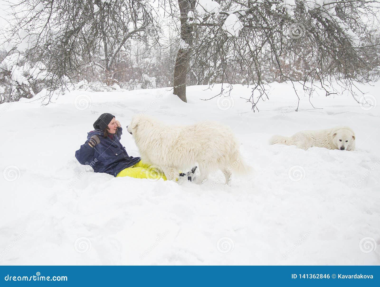 Kvinnadrev en hund i skogen