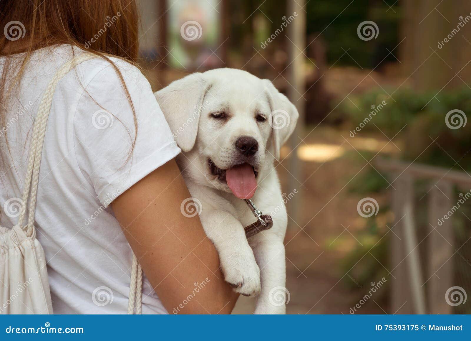 Kvinnan bär labradorhundvalpen med tungan som ut hänger