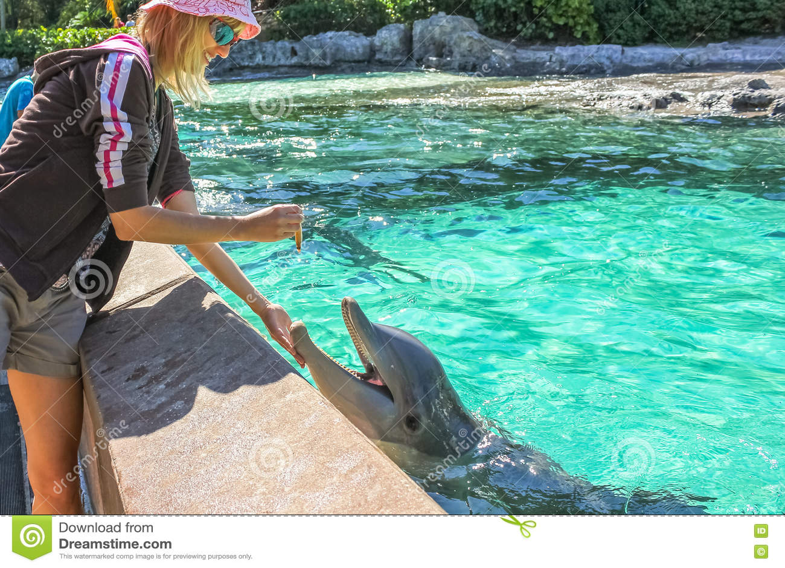 Kvinnan matar delfin