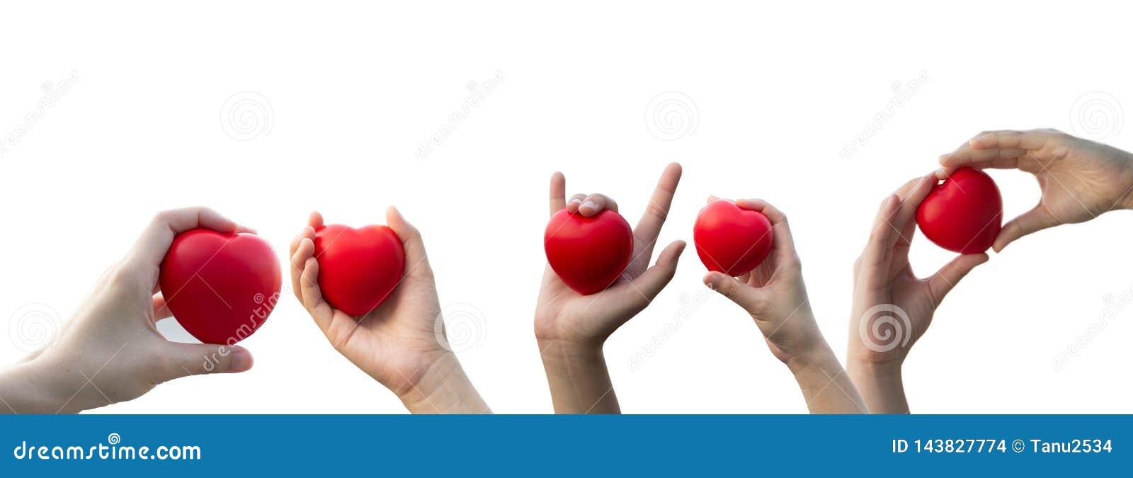 Kvinnas hand som rymmer en röd hjärta på isolerad vit bakgrund