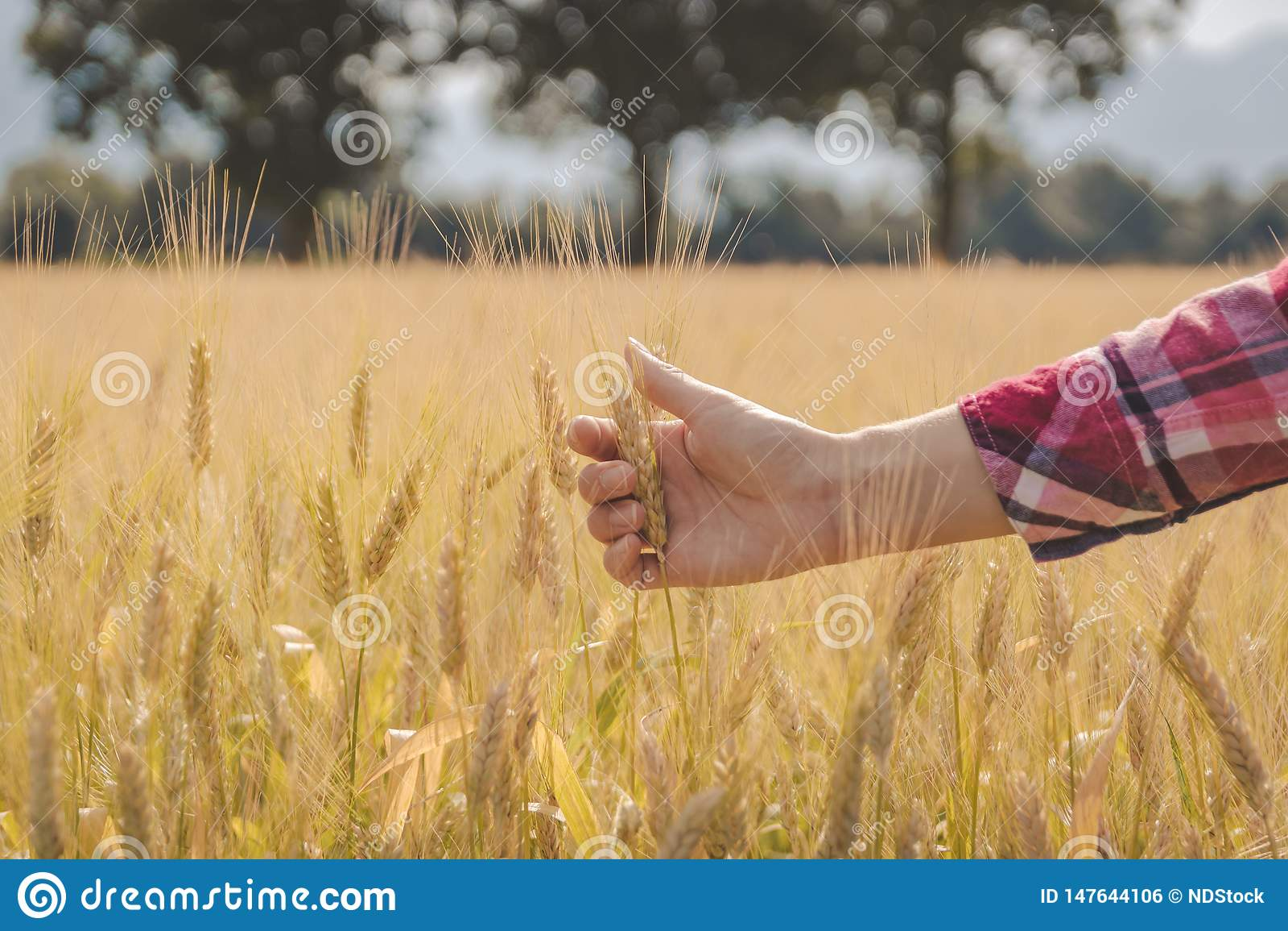 Kvinnas hand som trycker p? vete