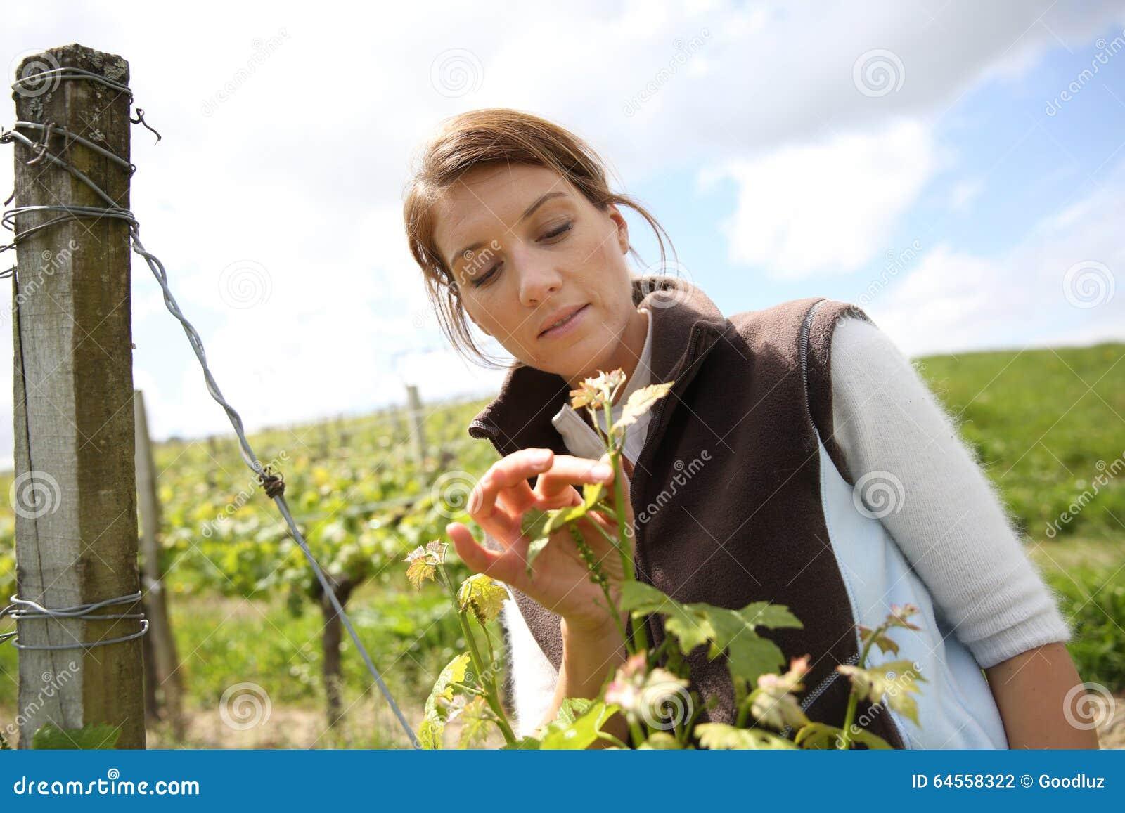 Kvinnawinegrower som kontrollerar blommor av vinrankor