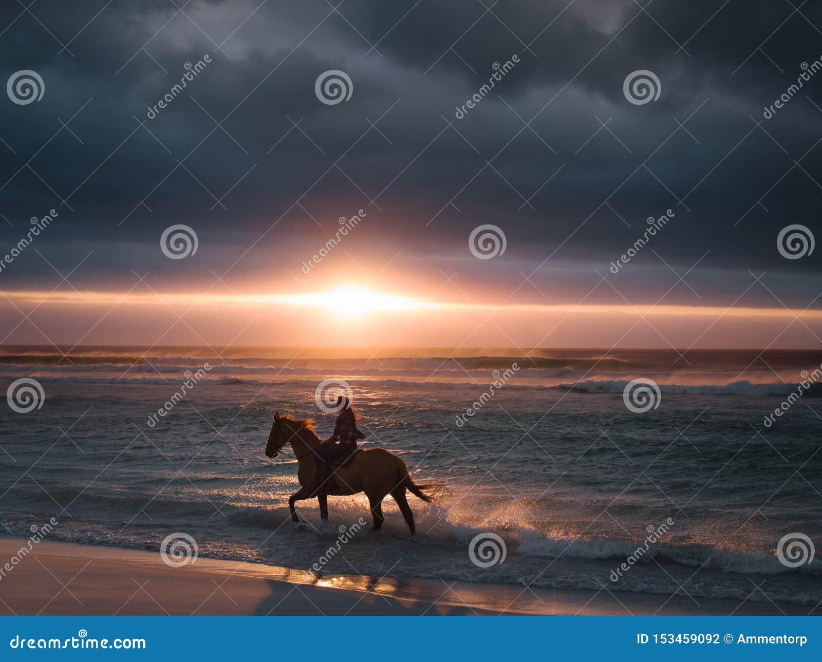 Kvinnlig rida häst längs stranden