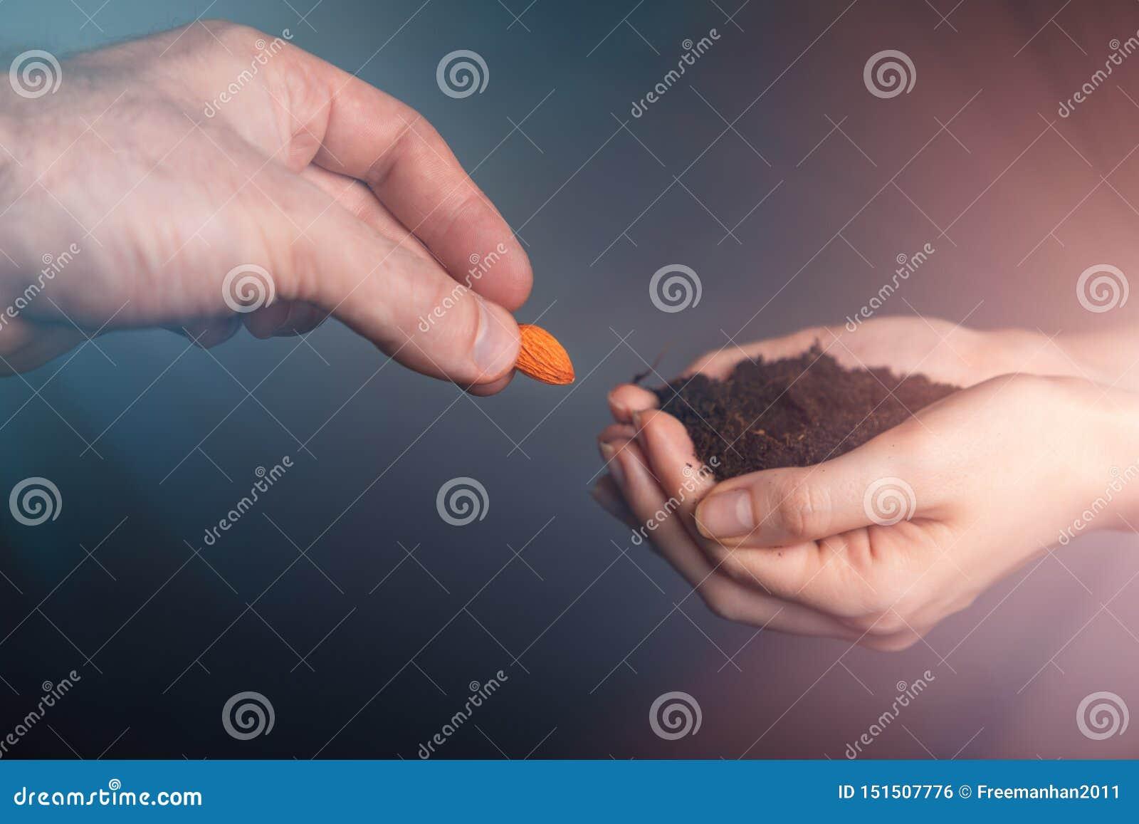 Kvinnors händer rymmer den fertila jordningen som mäns händer sätter i korn Begreppet av IVF, fertilitet och havandeskap close up