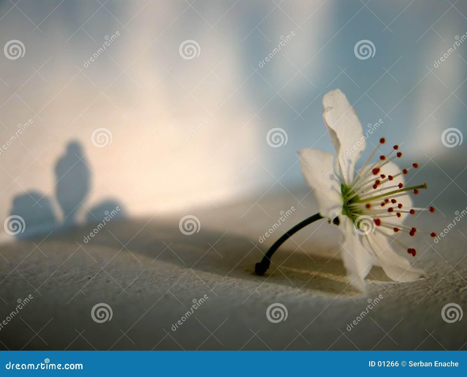 Kwiat światło