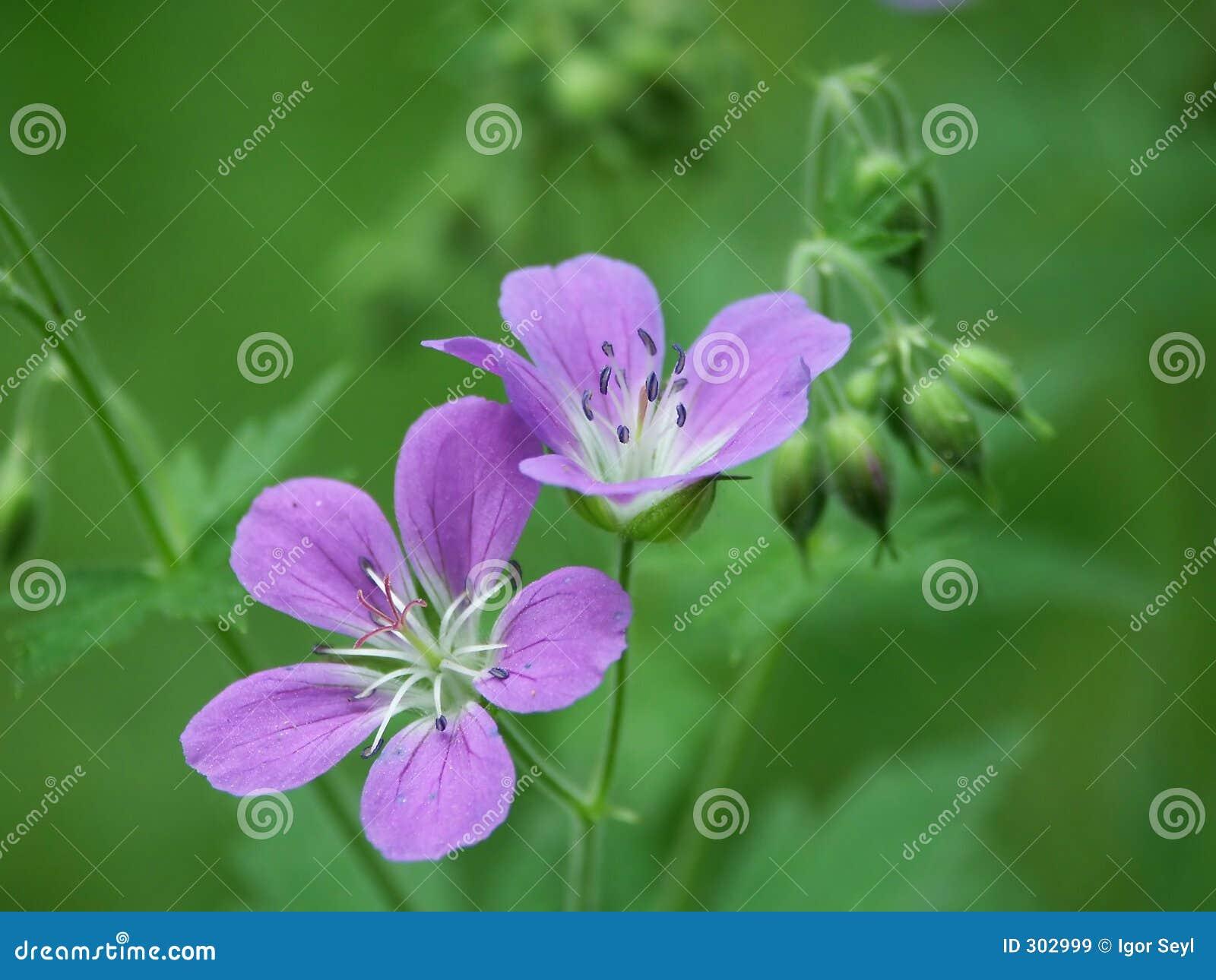 Kwiat drewna