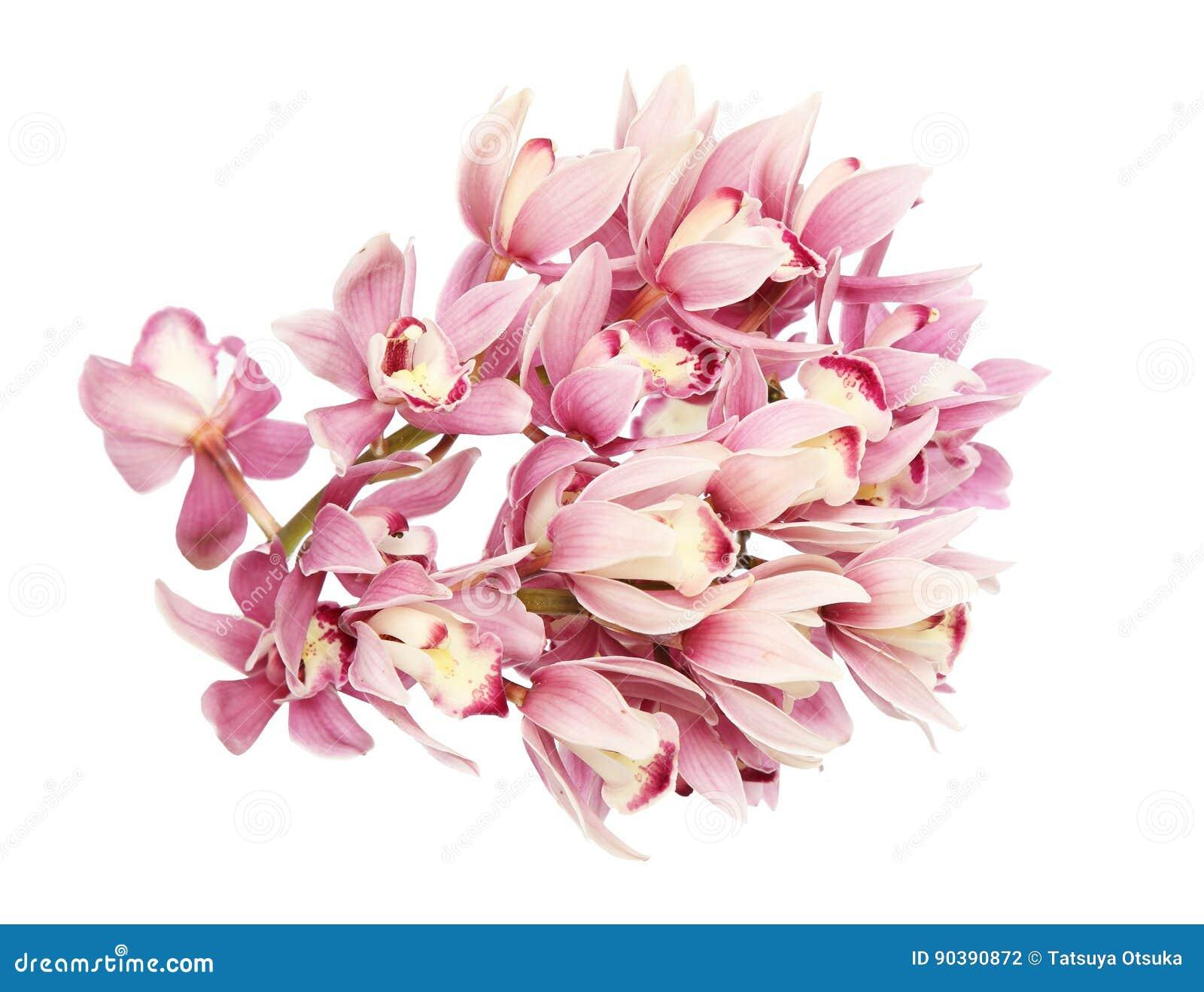 Kwiat głowa cymbidium