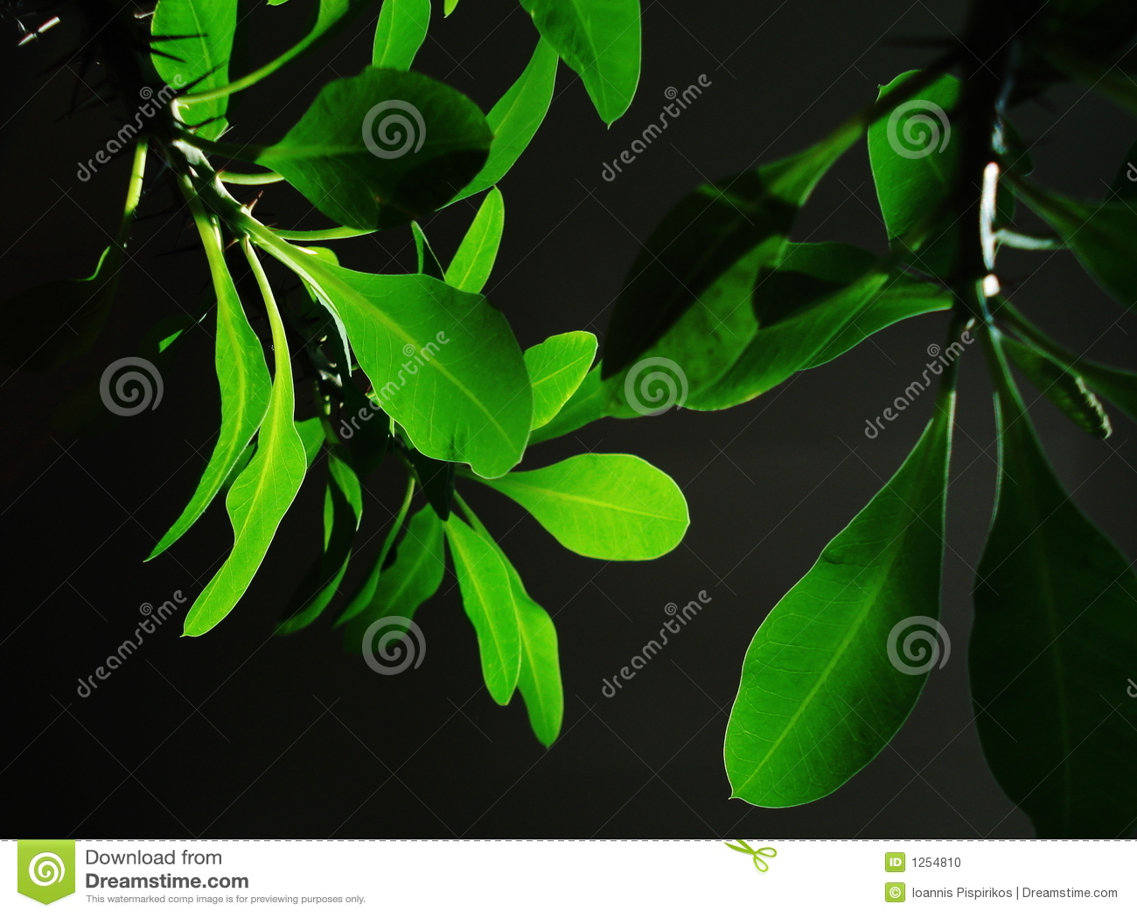Kwiat green