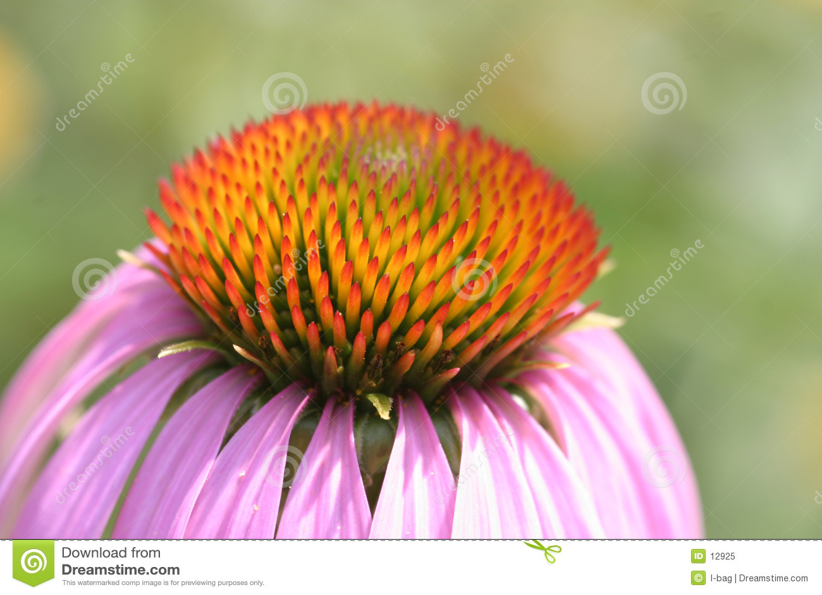 Kwiat kwiat