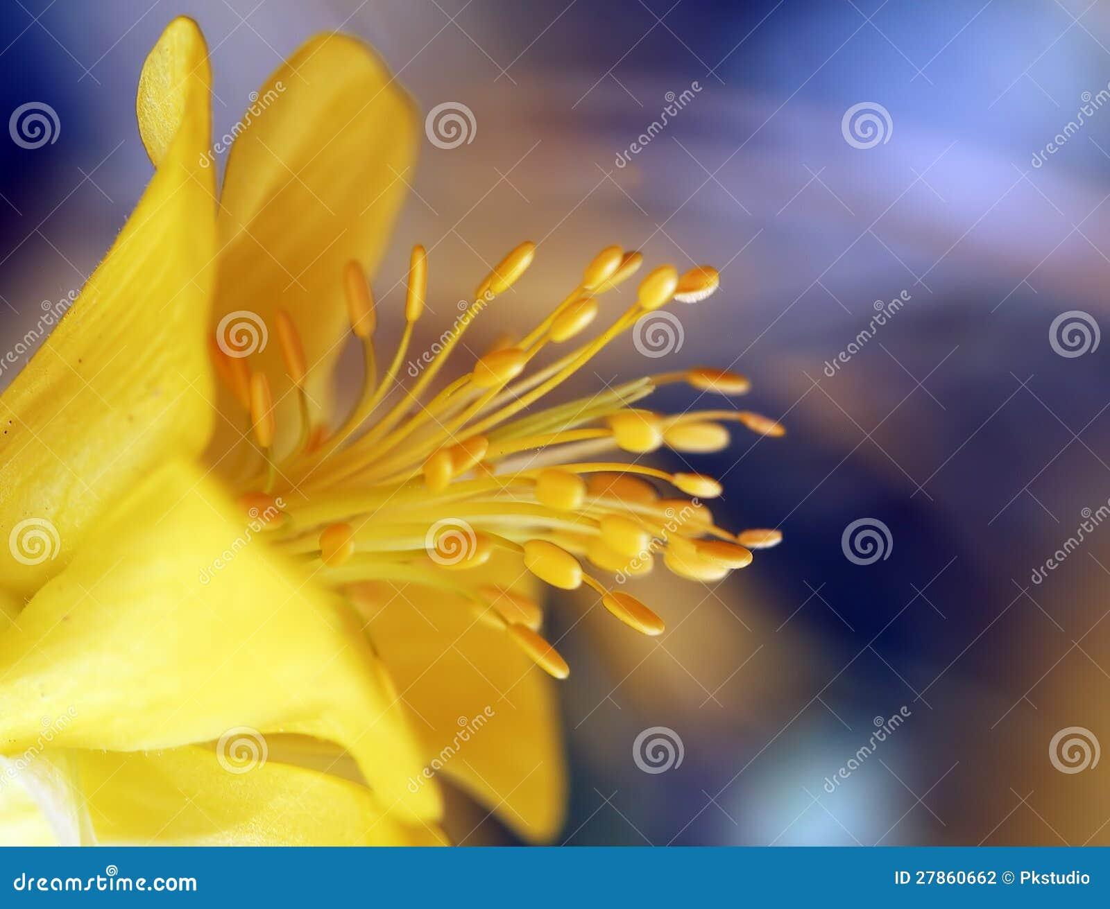 Kwiat makro- strzał