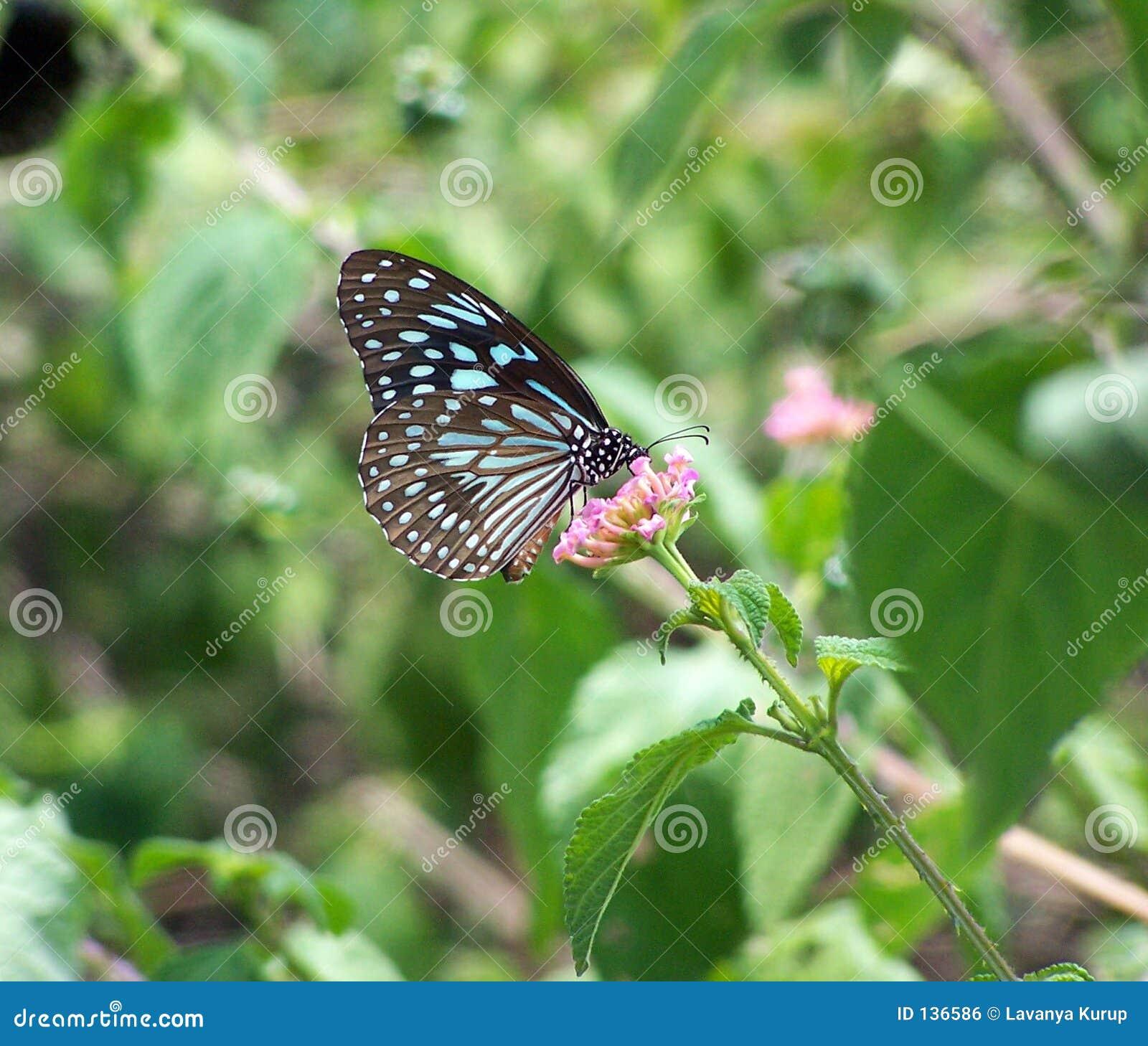 Kwiat motyla