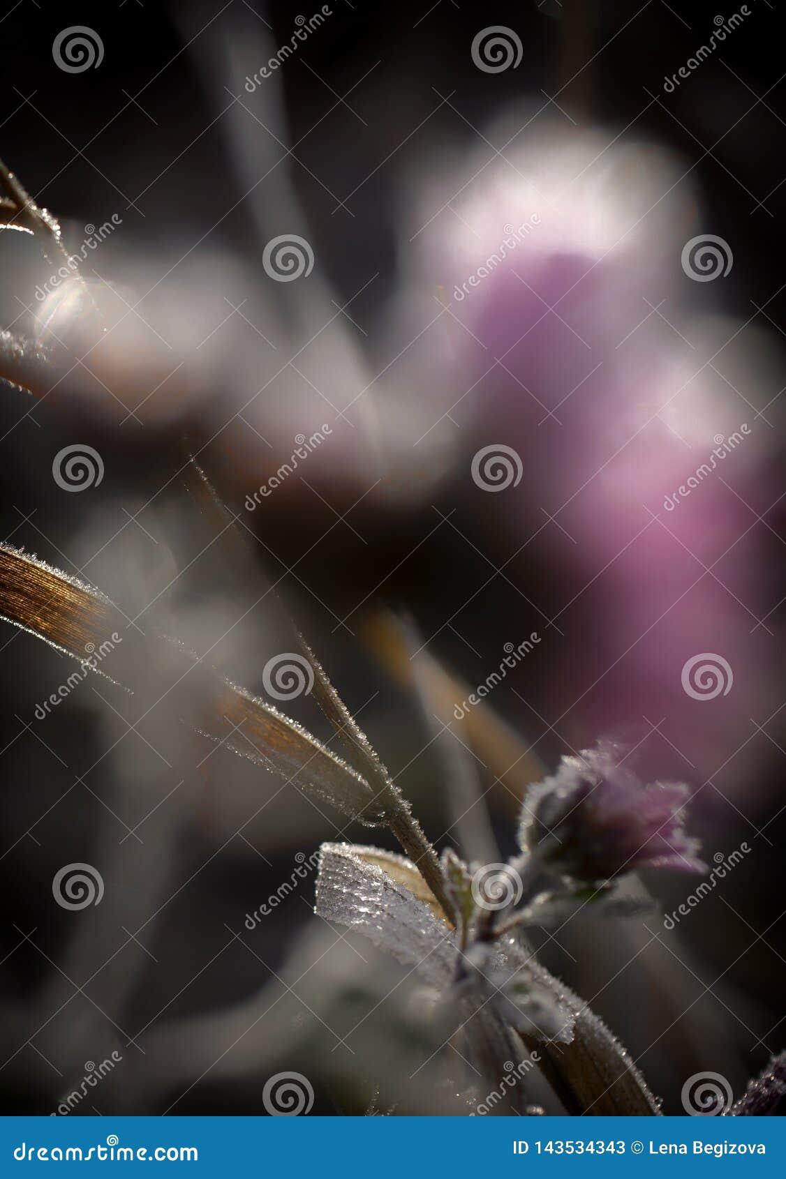 Kwiat mrożone