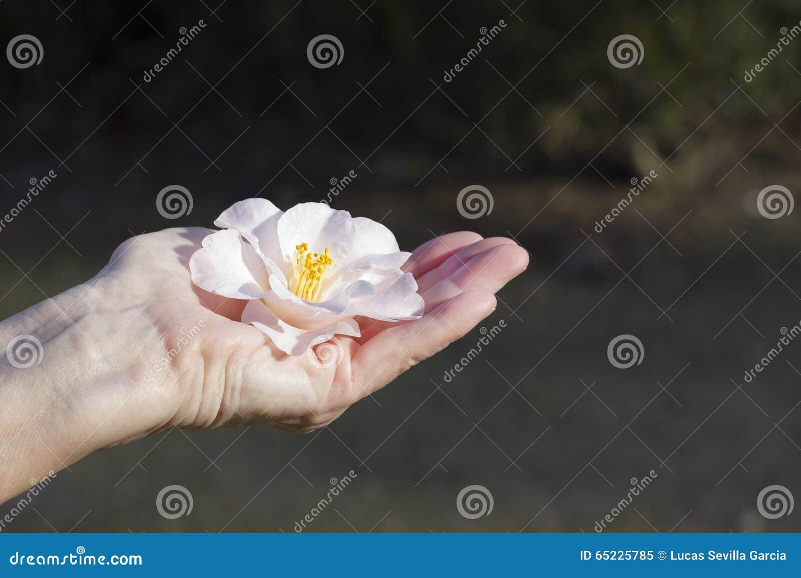 Kwiat ofiara