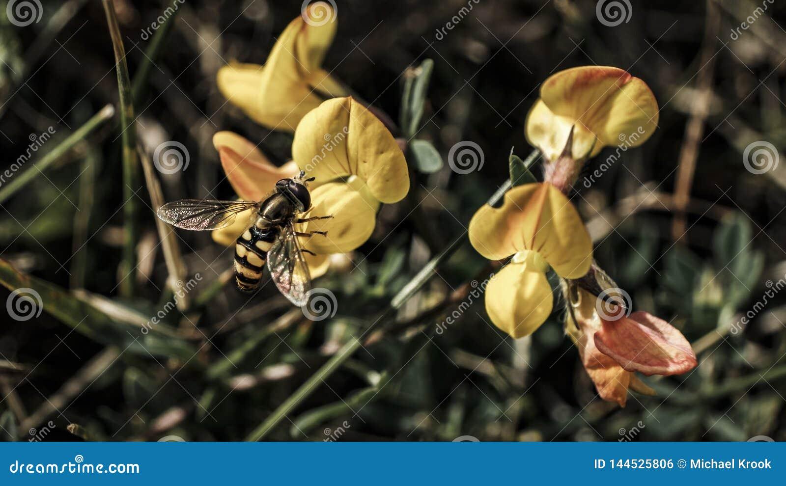 Kwiat osa