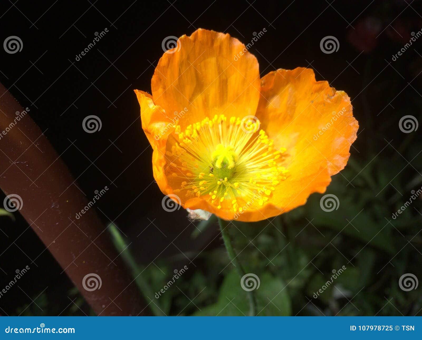 Kwiat ostatnio brać