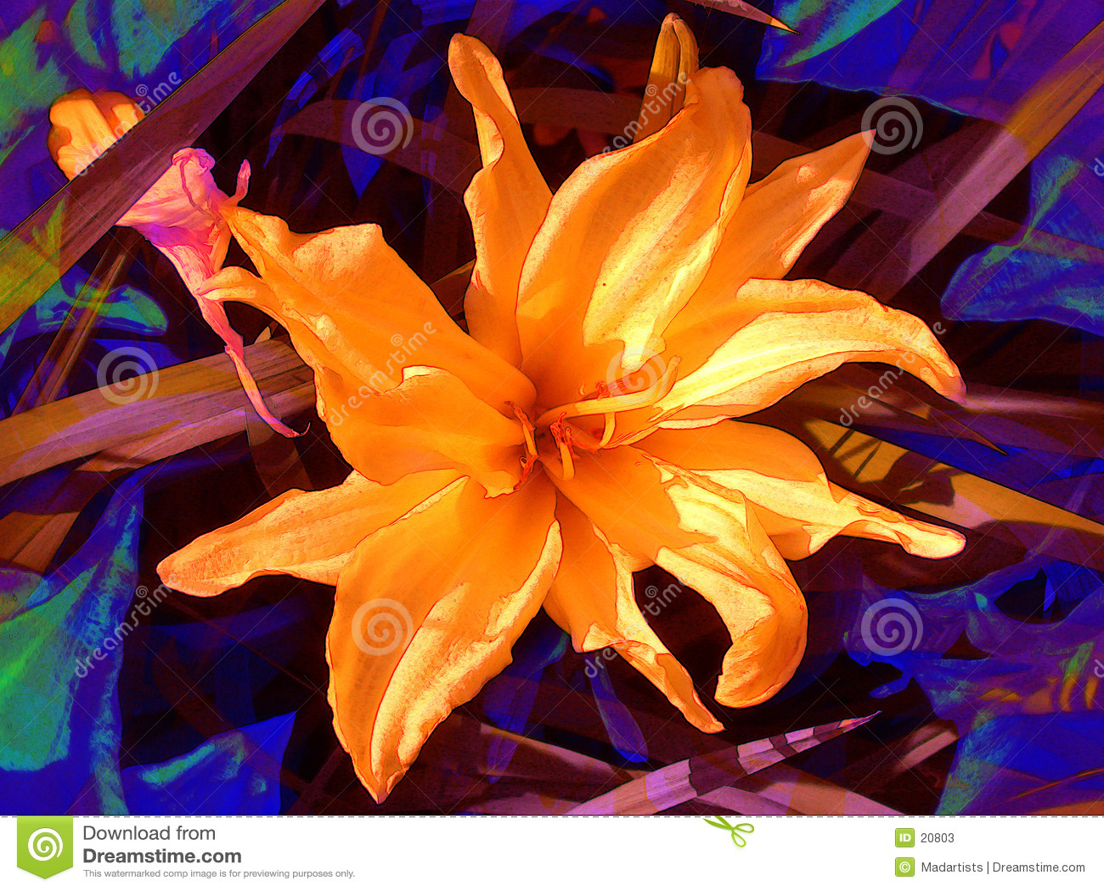 Kwiat pomarańczy płatków kwiatu