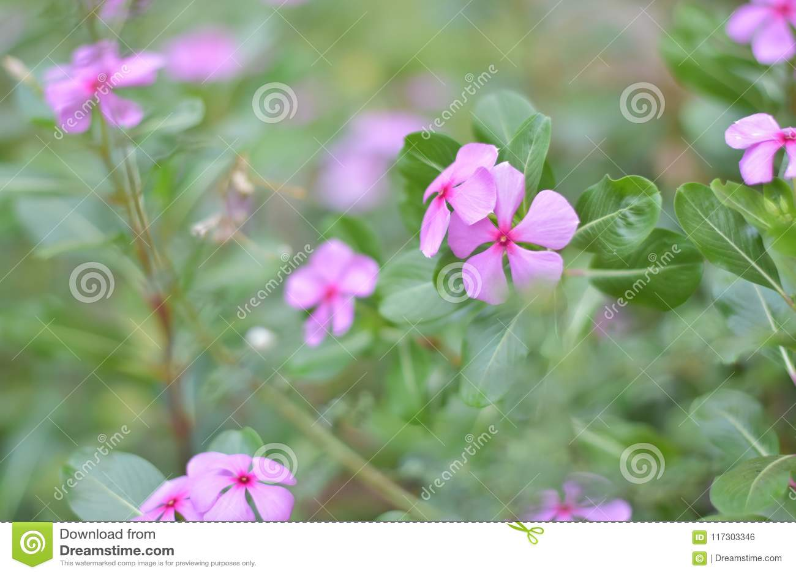 Kwiat różowa przyszłość