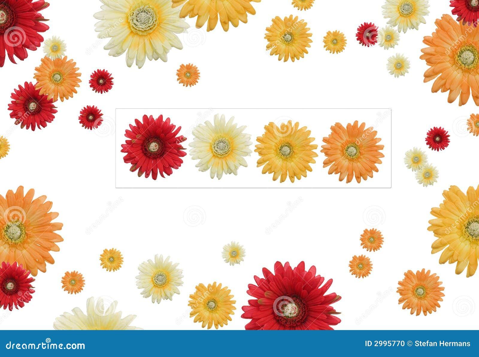 Kwiat rama