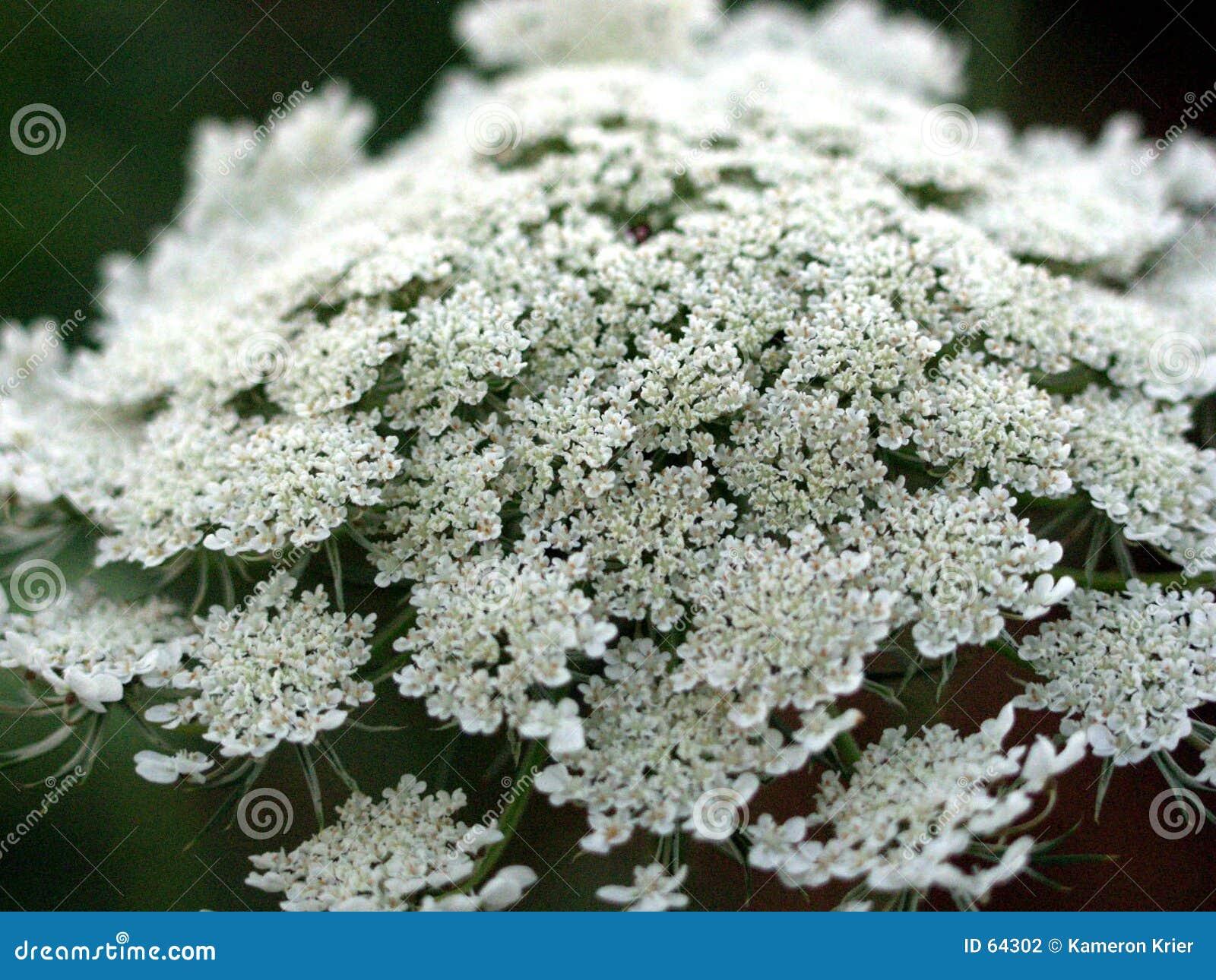 Kwiat stanowisko ogniska white