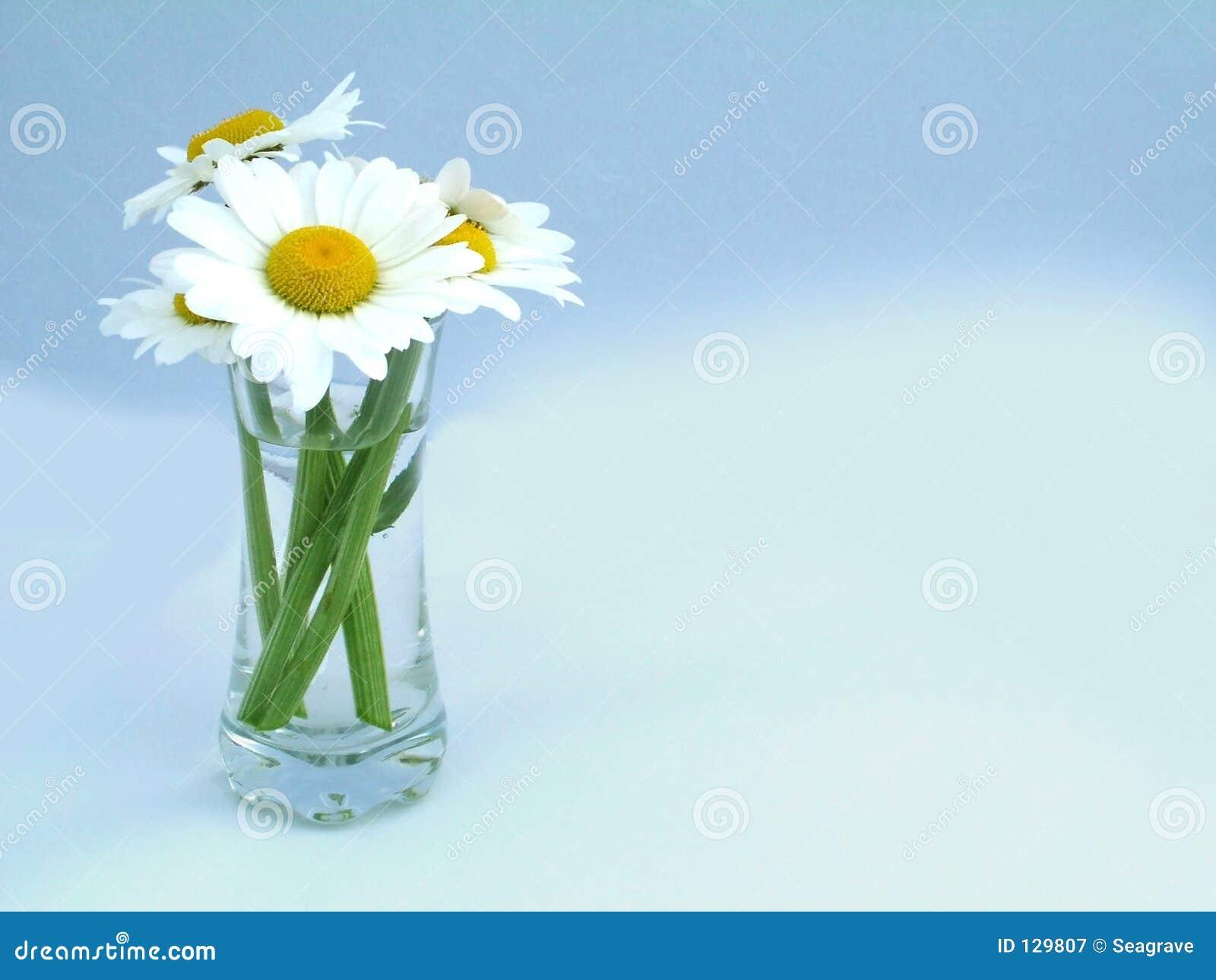 Kwiat strzał