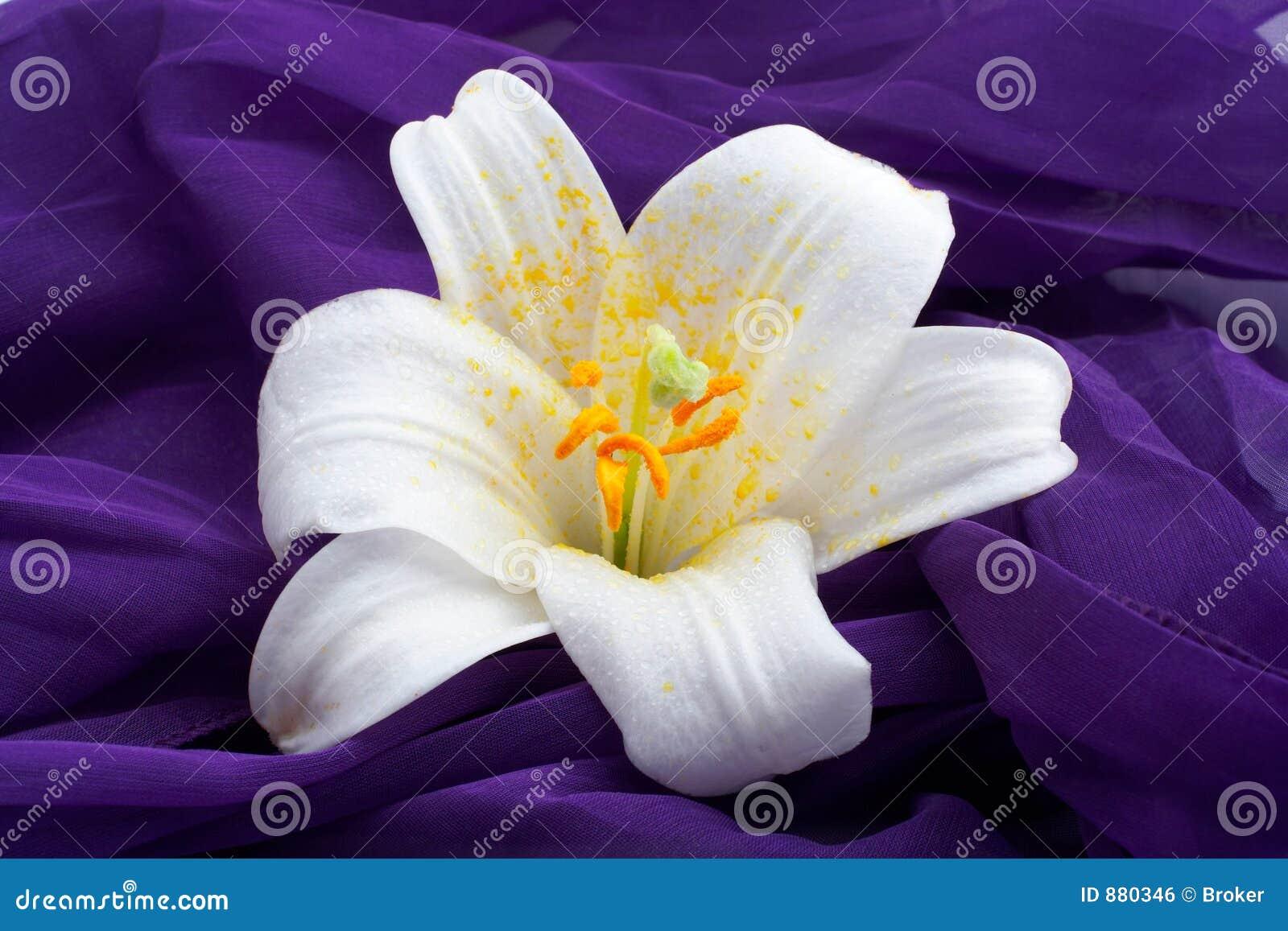 Kwiat strzały makro white
