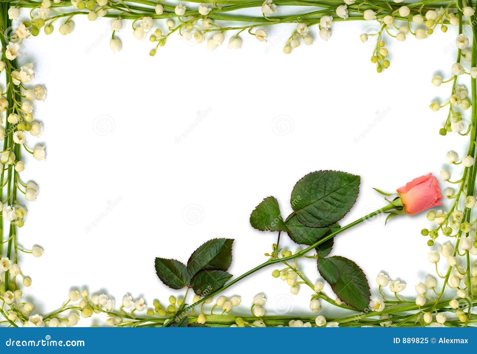 Kwiat tła ramy różowego pięknej rose
