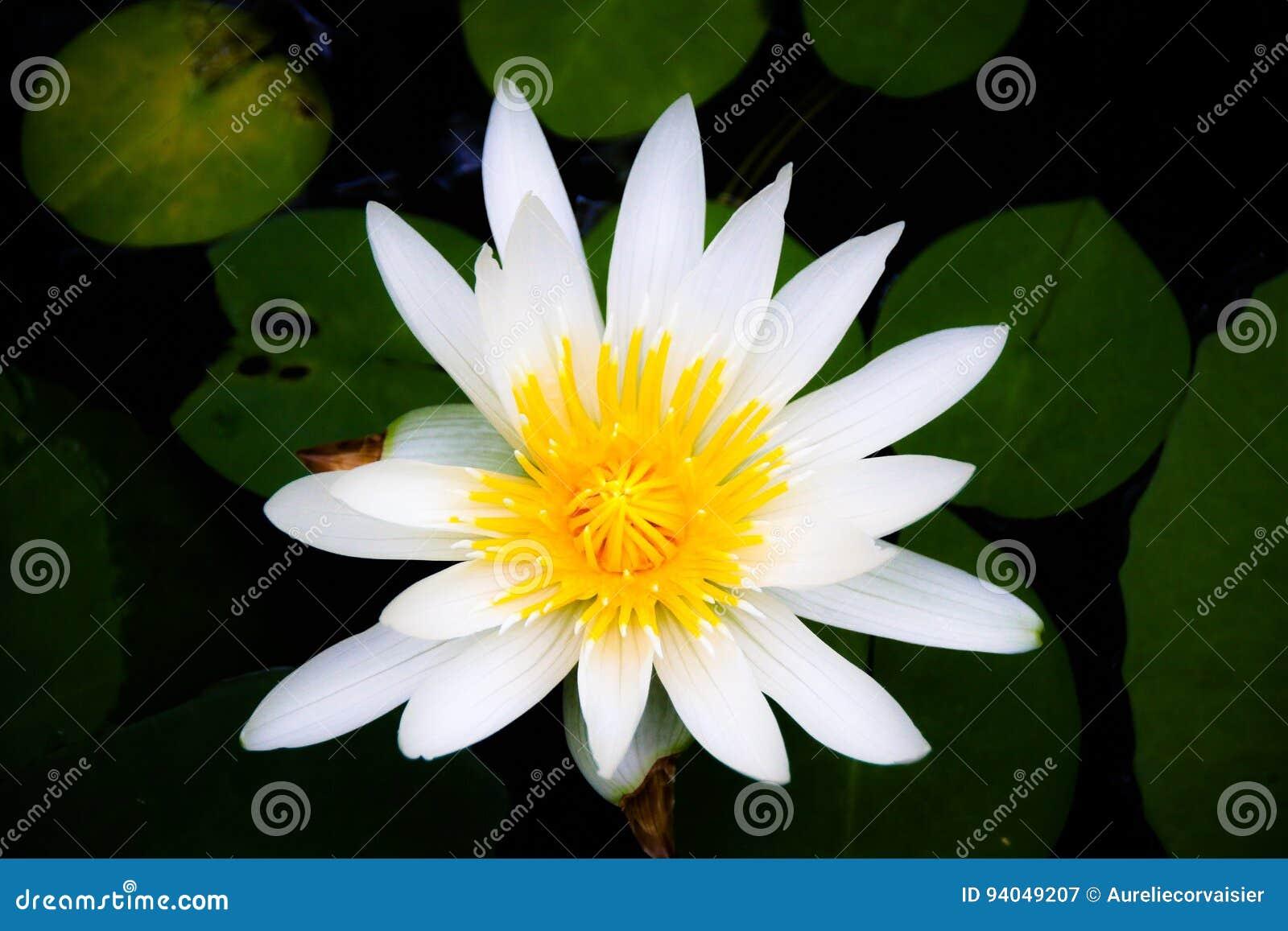 Kwiat władza