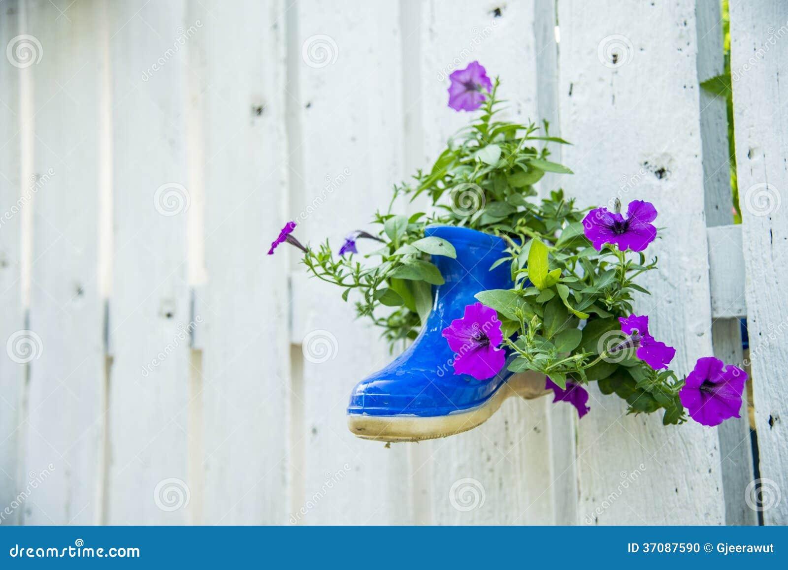 Download Kwiat W Bucie Na Drewnianym Ogrodzeniu Zdjęcie Stock - Obraz złożonej z stokrotka, ogród: 37087590