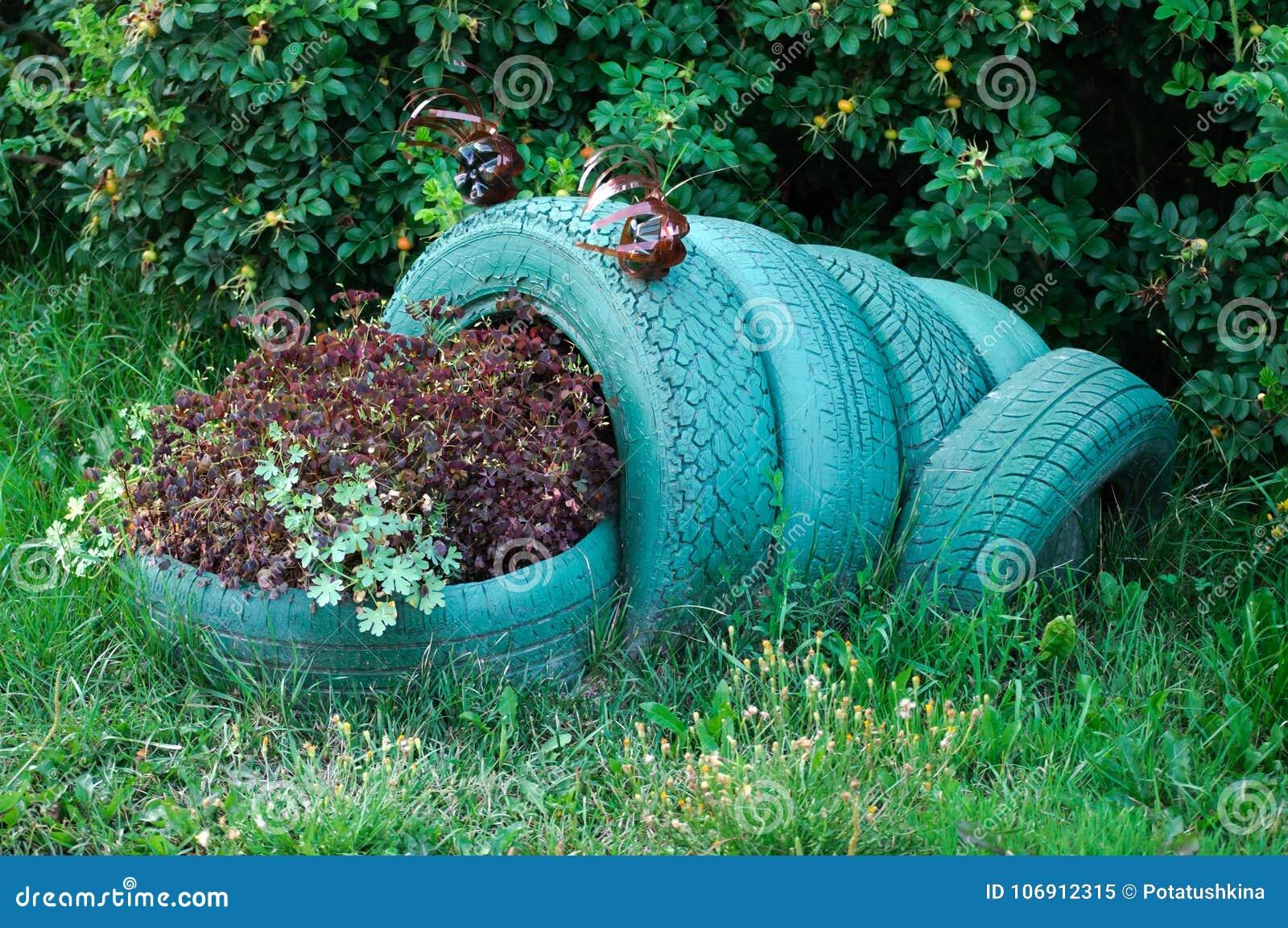 Kwiat w postaci żaby robić używać samochód opony