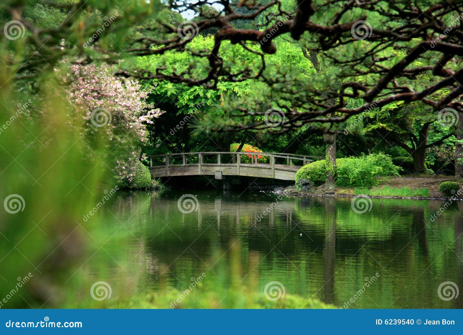 Kwiat wiśni bridge