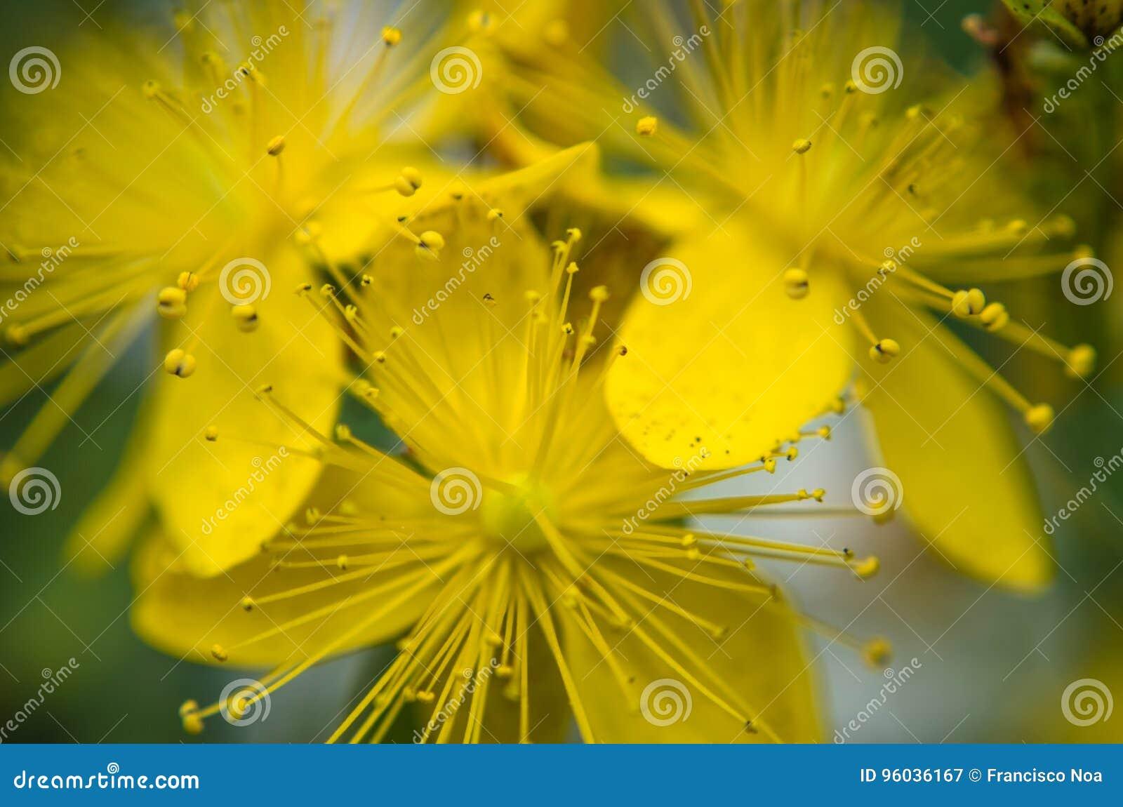 Kwiat wiosny leśny white