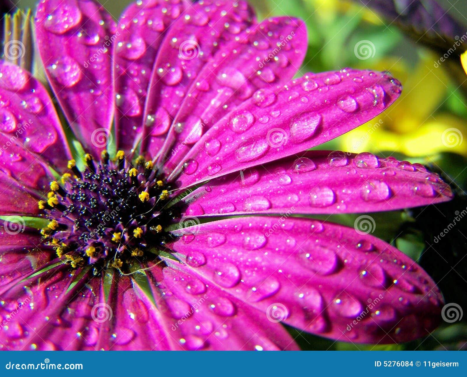 Kwiat wody