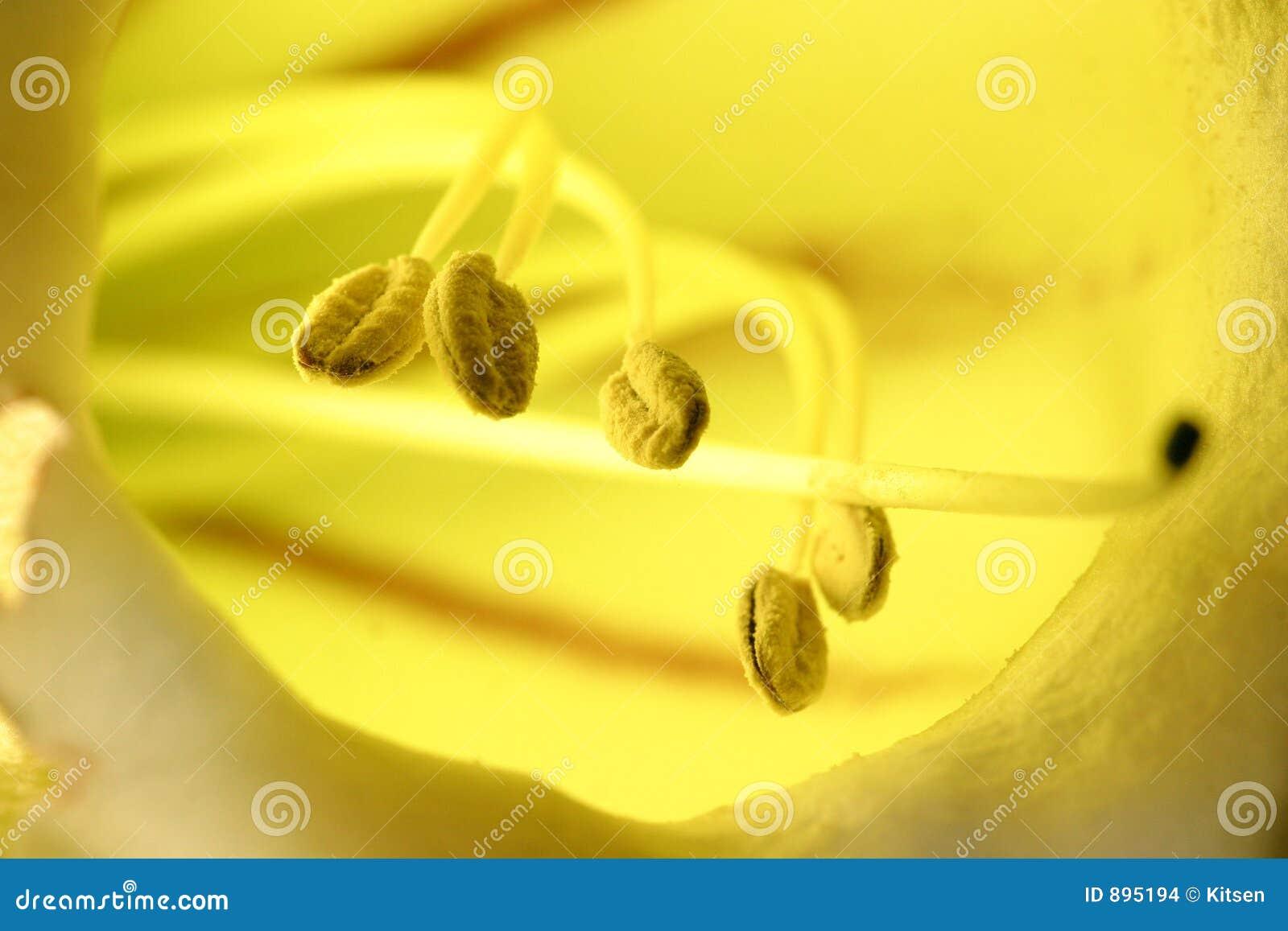Kwiat złoty kielich