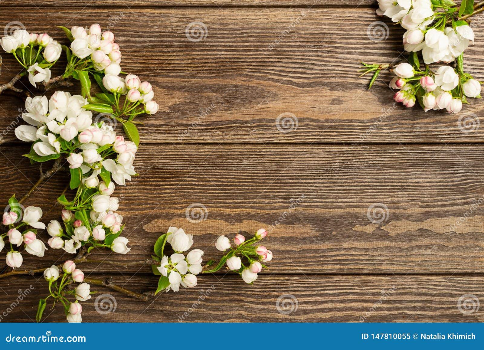 Kwiatonośna jabłoni gałąź na drewnianym tle przeciw t?a poj?cia kwiatu wiosna bia?y ?