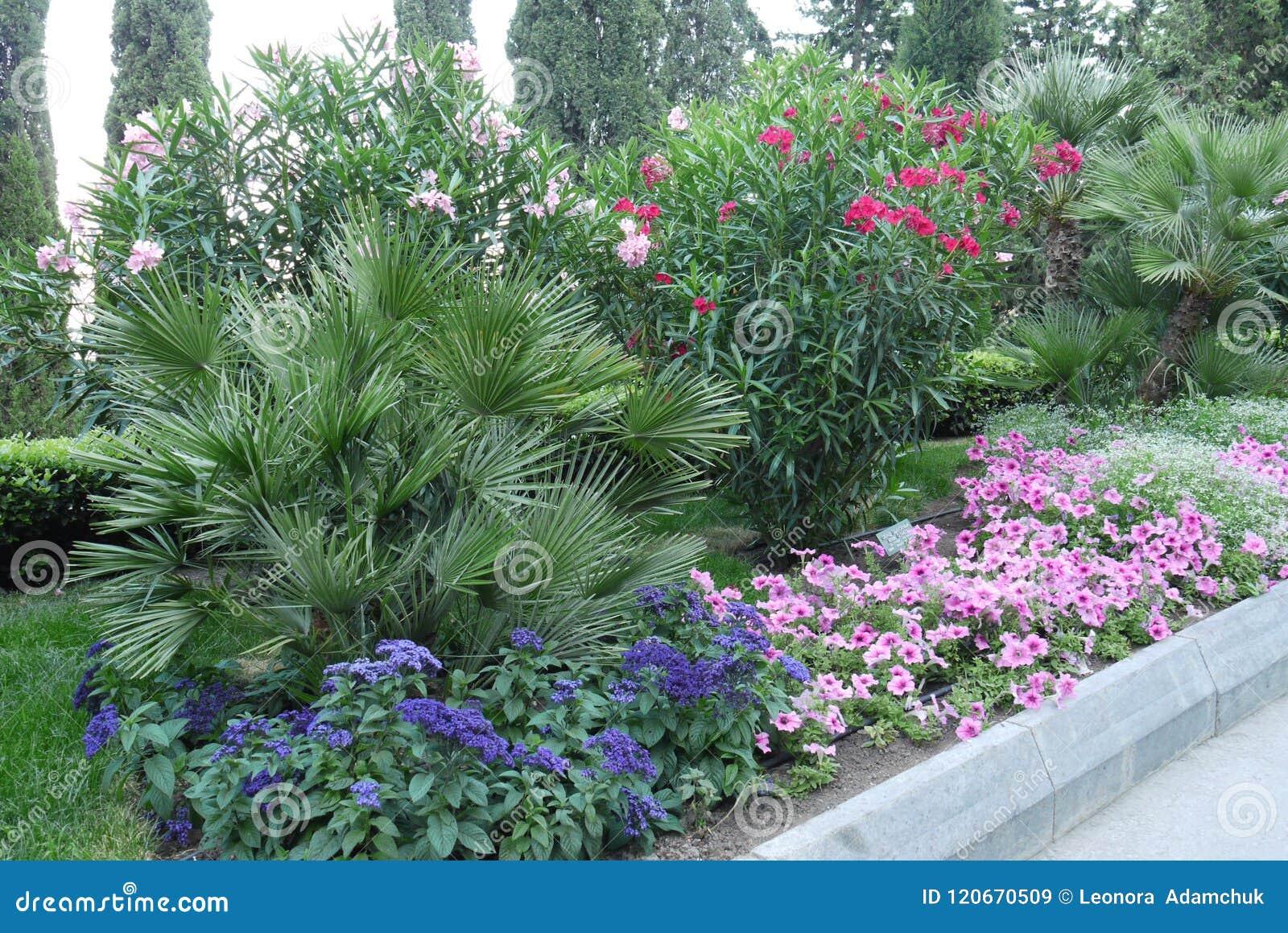 Kwiatu łóżko z błękitem, menchiami i karmazynami, kwitnie Chcę brać taki piękno ale je w dom drzeć je, ` s politowanie