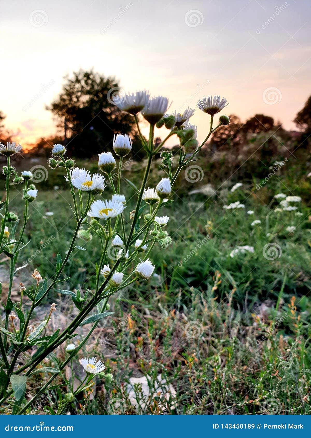 Kwiatu az zmierzch