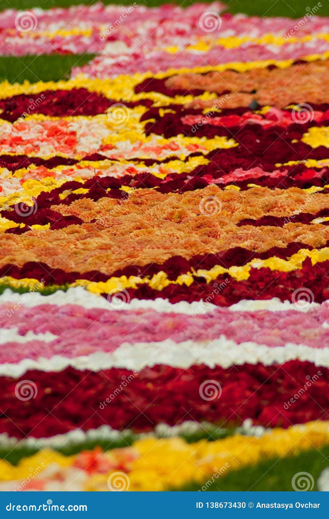 Kwiatu dywan na Grande miejscu w Bruksela