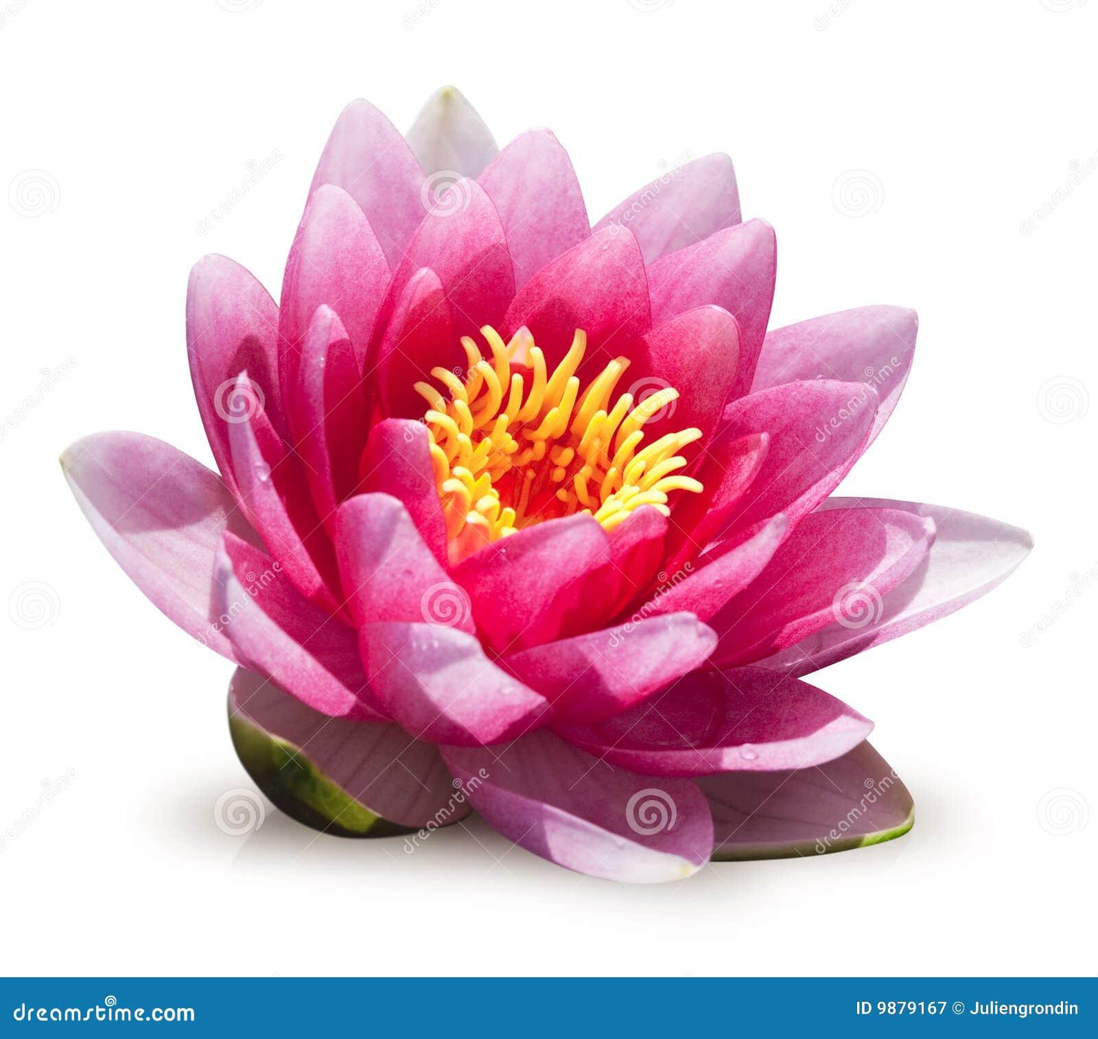 Kwiatu lelui woda