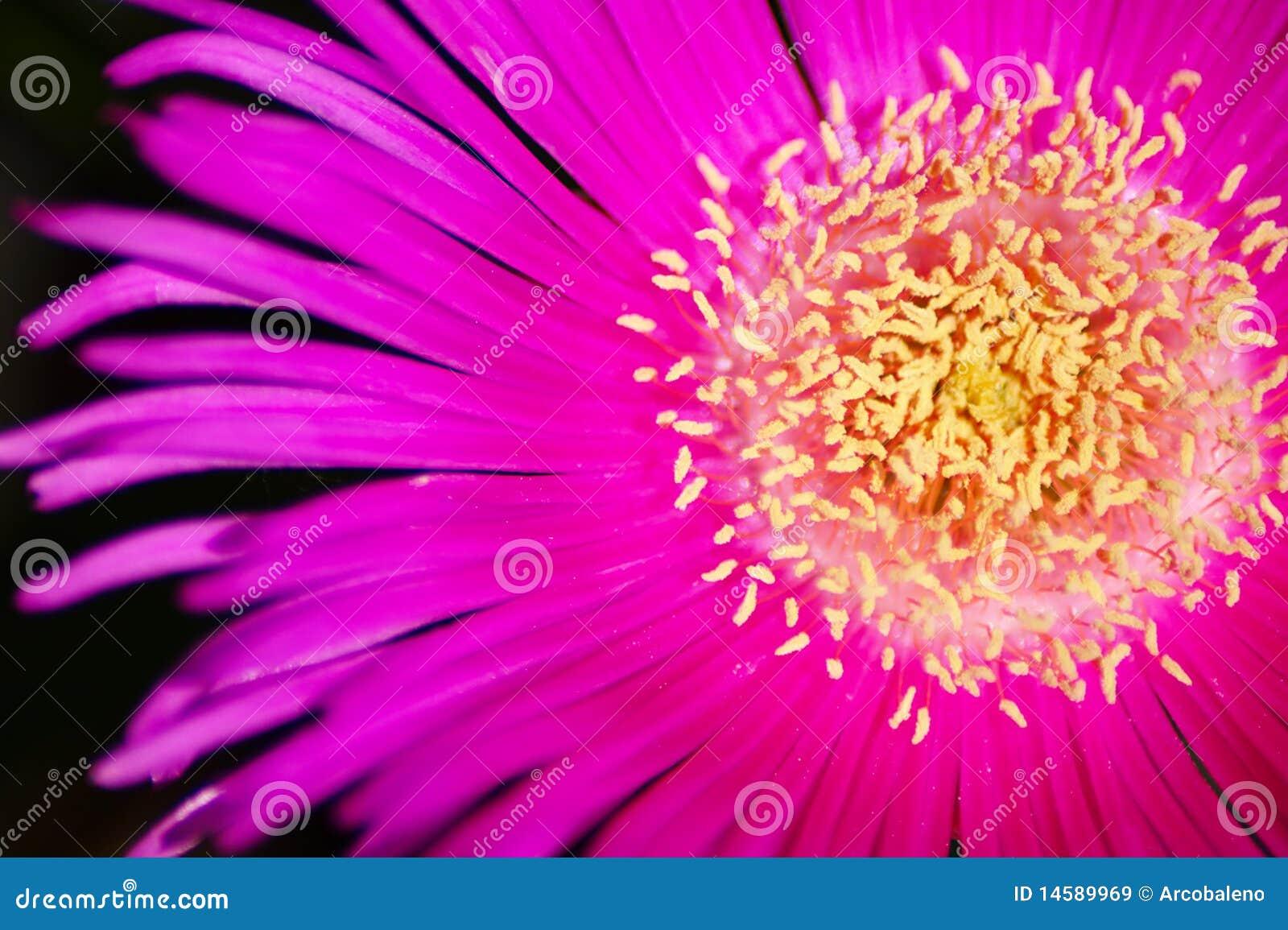 Kwiatu macro