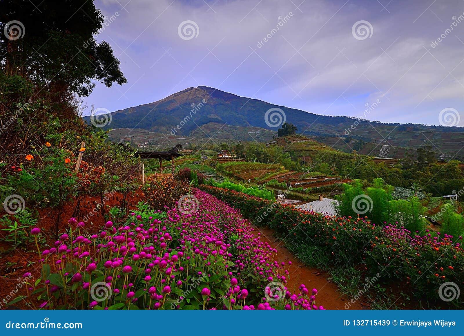 Kwiatu ogród Silancur Cudowny Magelang Indonezja