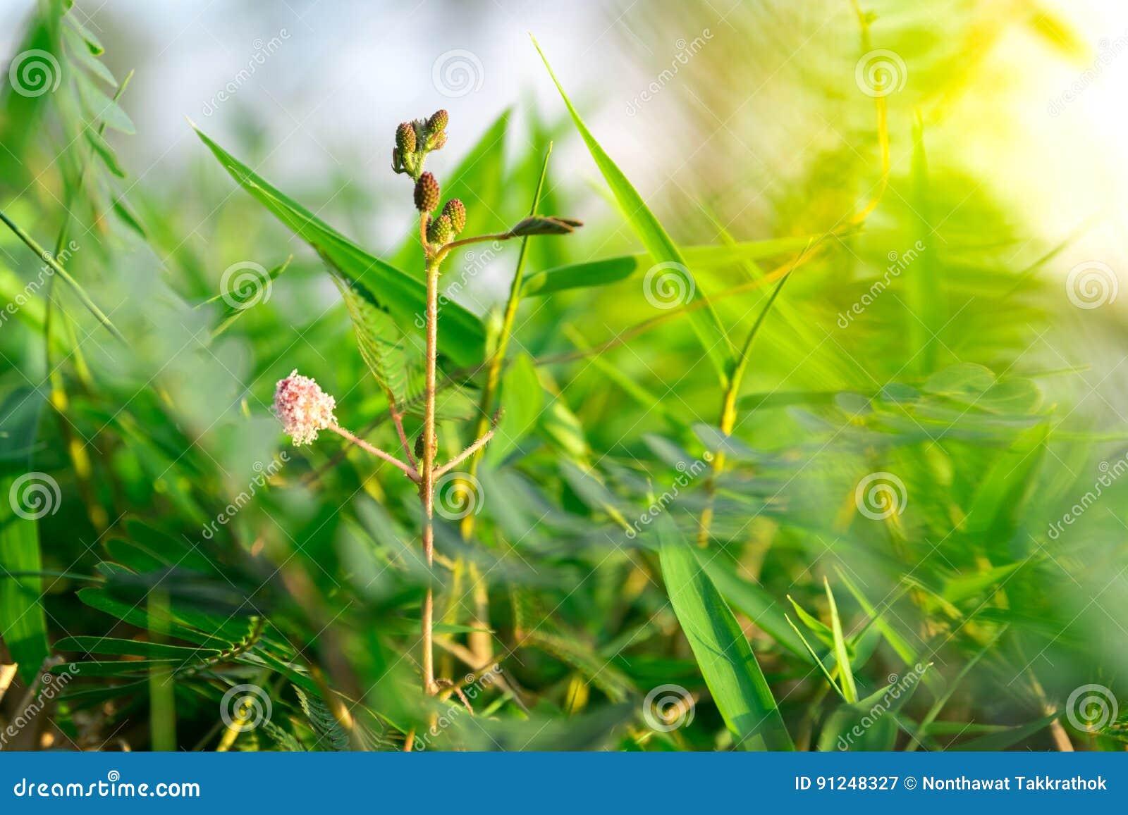 Kwiatu pączek z zielonym liściem