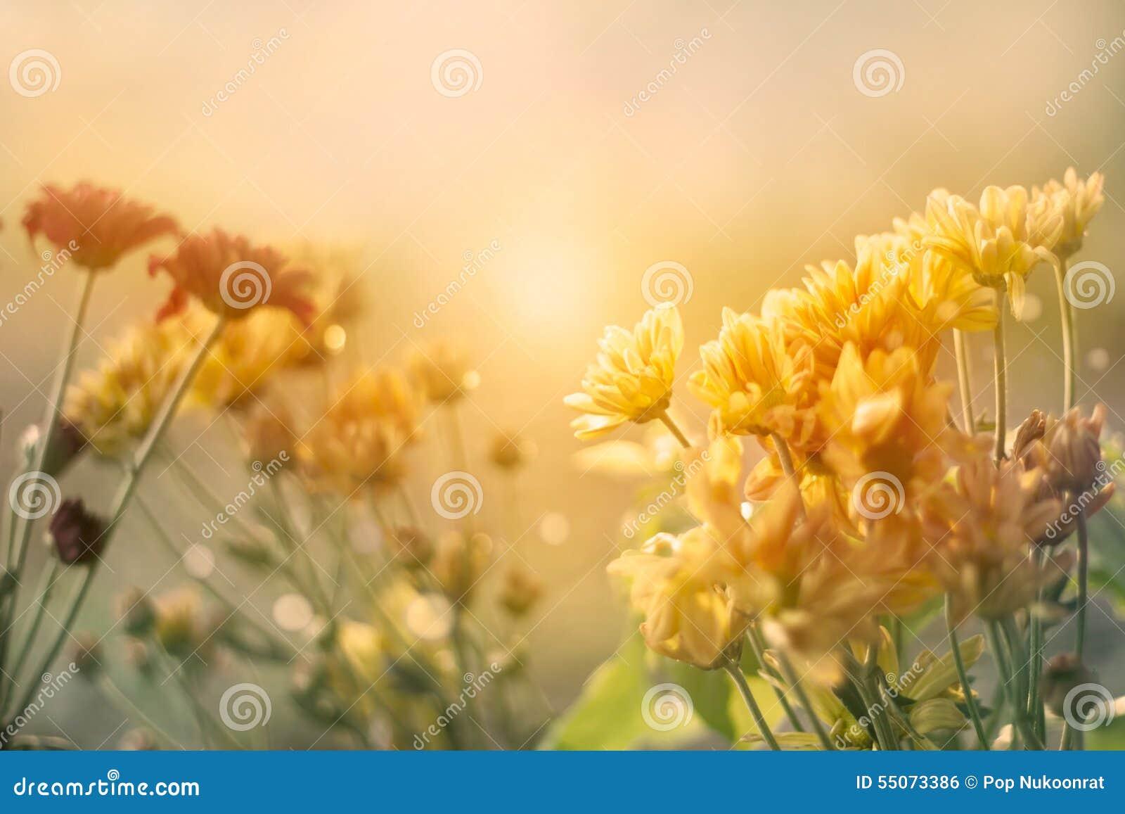 Kwiatu pole przy zmierzchem w pastelowym rocznika koloru brzmienia stylu