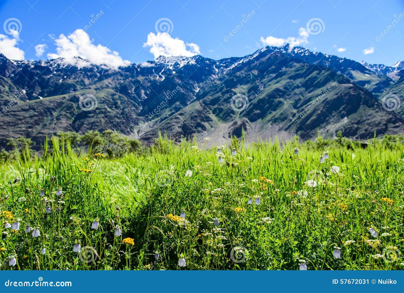 Kwiatu pole z śnieżną górą i słonecznym dniem