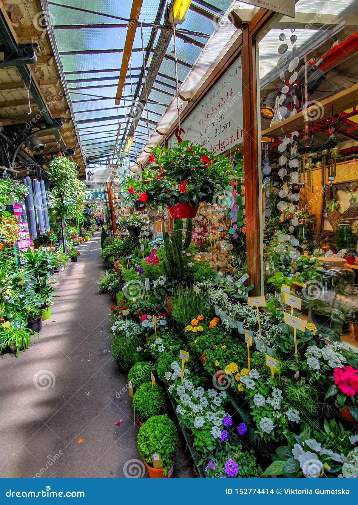 Kwiatu rynek w Paryż lokalizował na Ile De Los angeles Cytujący między Notre-Dame katedrą, Sainte-Chapelle kaplicą i