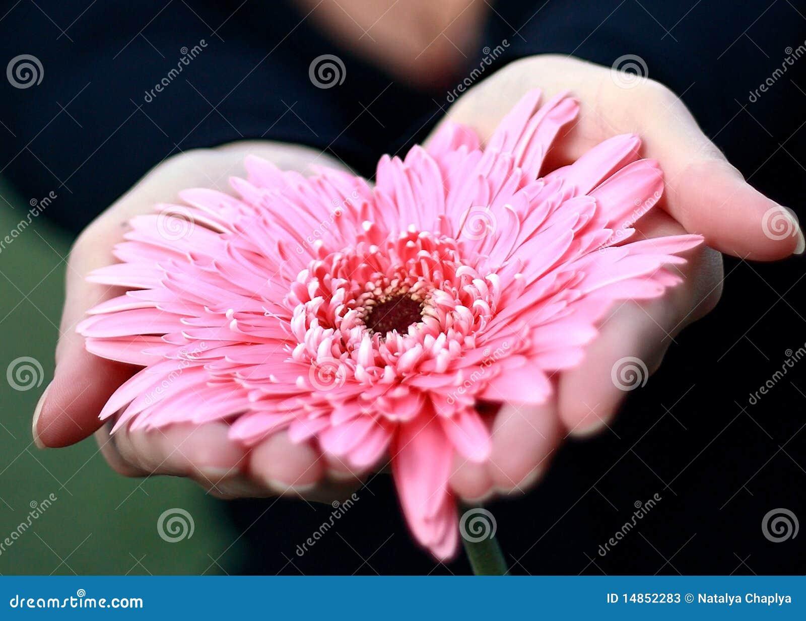 Kwiatu serce