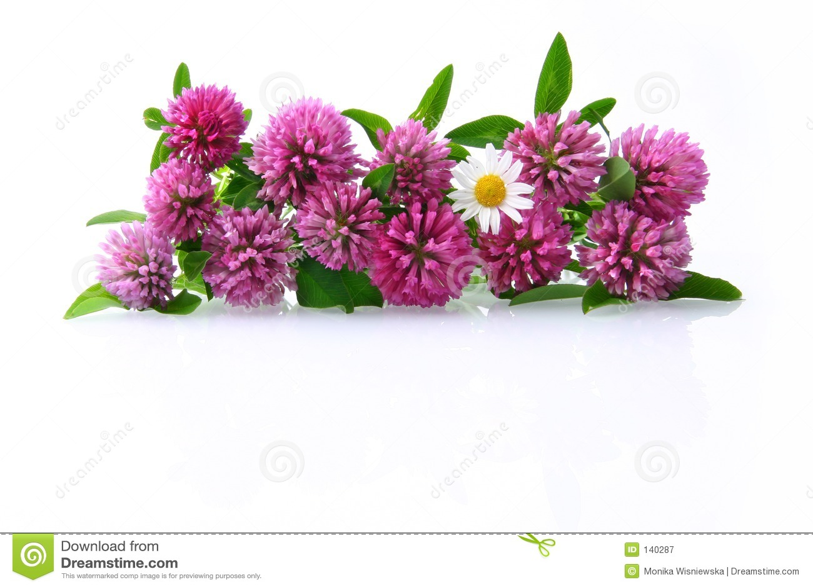 Kwiaty łąkę