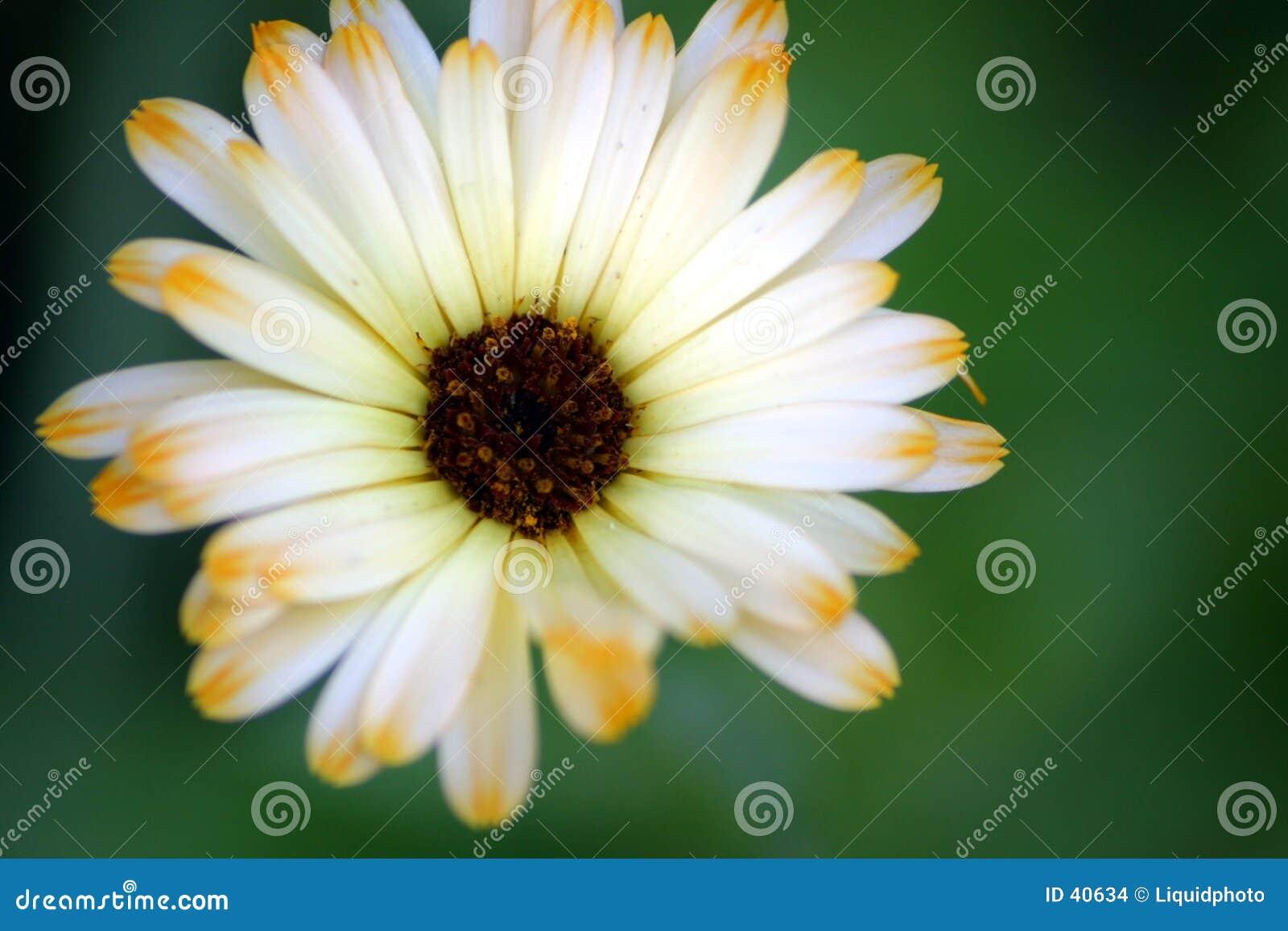 Kwiaty 2 płatkiem
