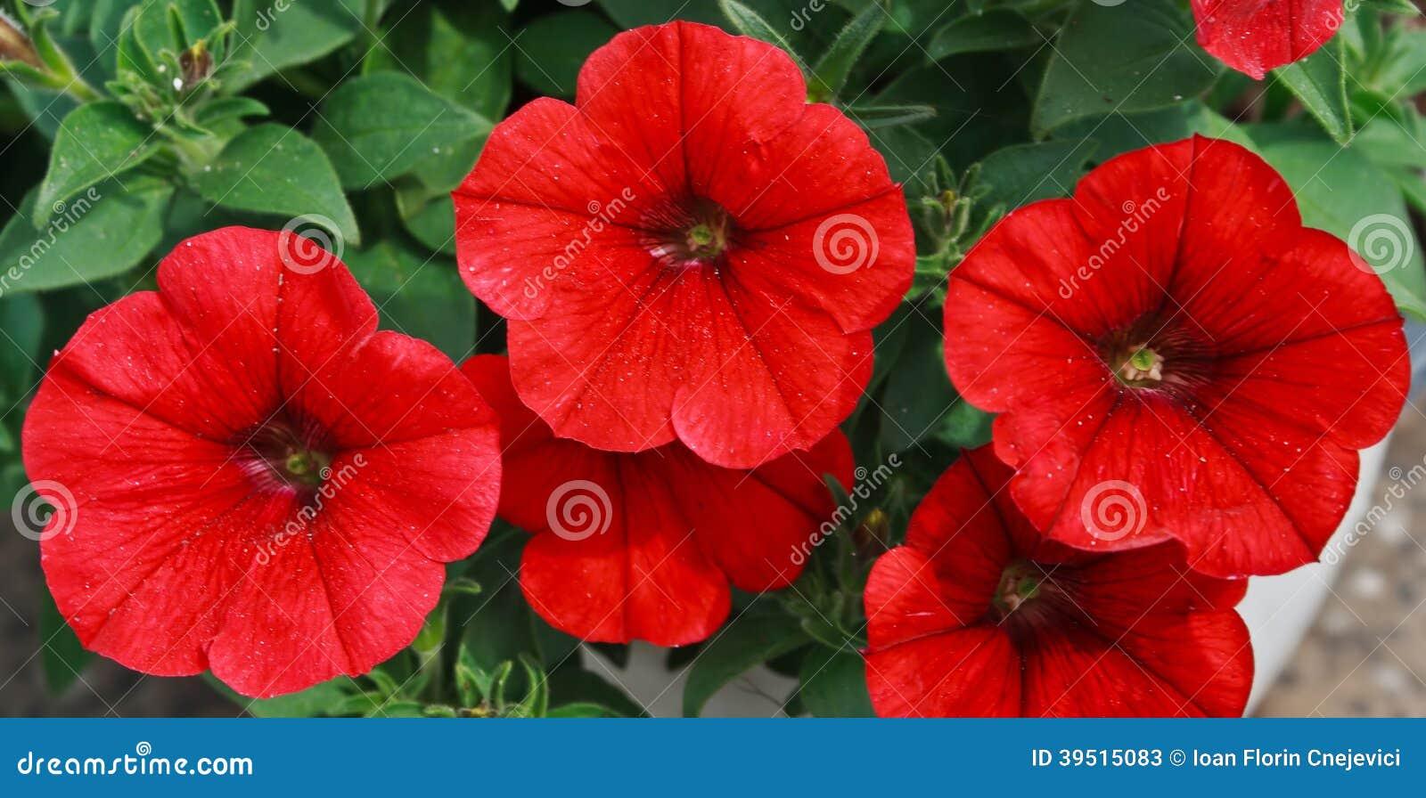 Kwiaty 19