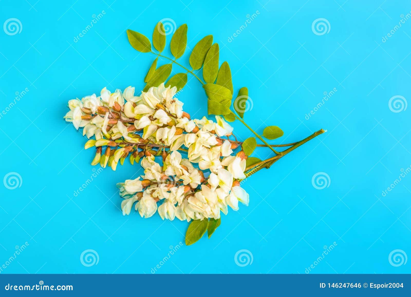 Kwiaty akacja